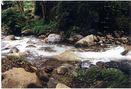 Preciosa finca en boquete , panamá , 22 hectáreas