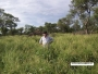 Escrit. González vende campos en Paraguay, Uruguay y Argentina