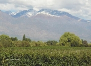 Planting of olive trees in Argentina 164 hectares ,acres,sales