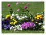 lanscaping services & lawn care mantienence