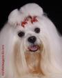 Fotografia Profesional de Mascotas en Costa Rica por Andre Image Studio