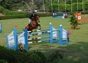 Cuidar rancho con caballos