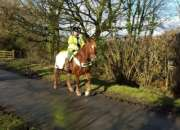 caballos de Gales disponibles para nuevas viviendas