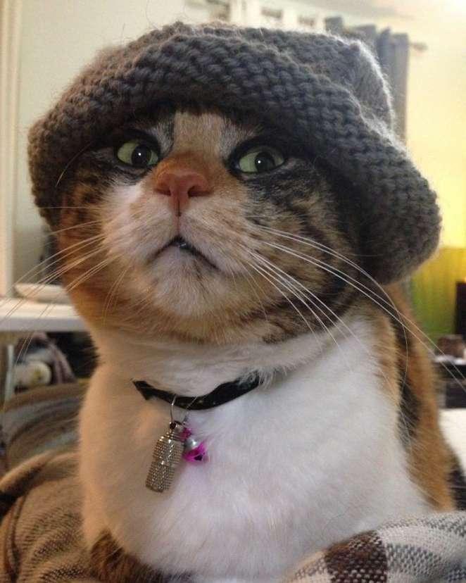 Las fotos de gatos generan paz y tranquilidad.